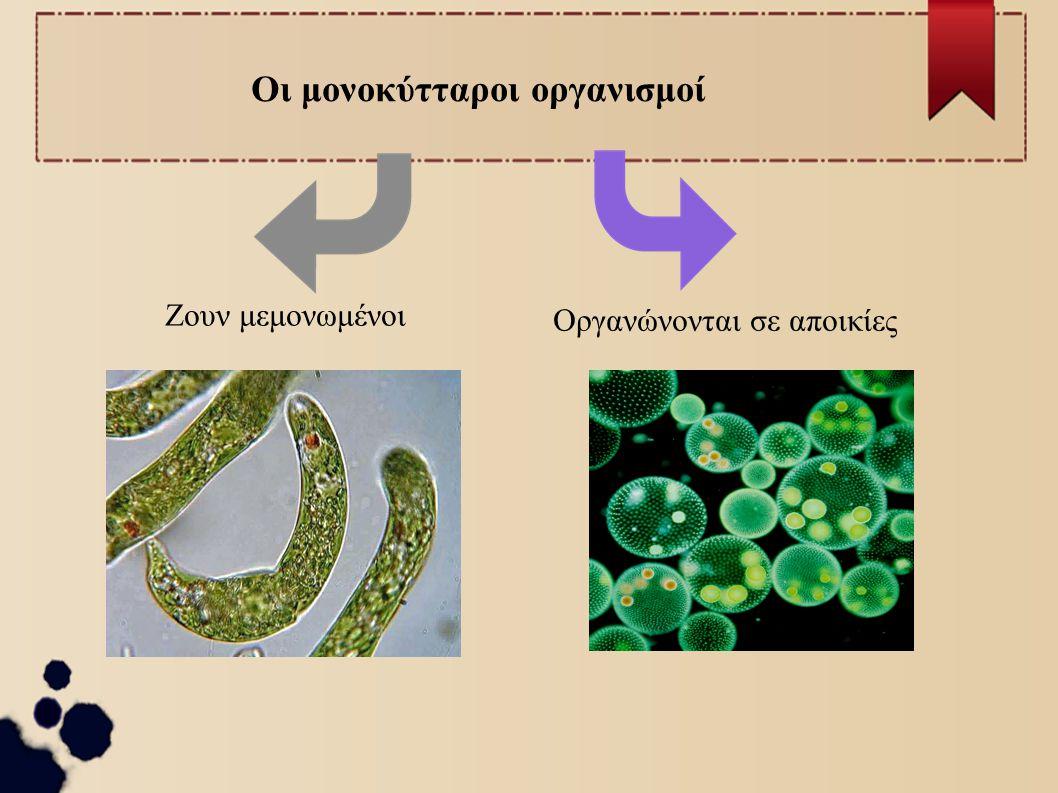 Οι μονοκύτταροι οργανισμοί