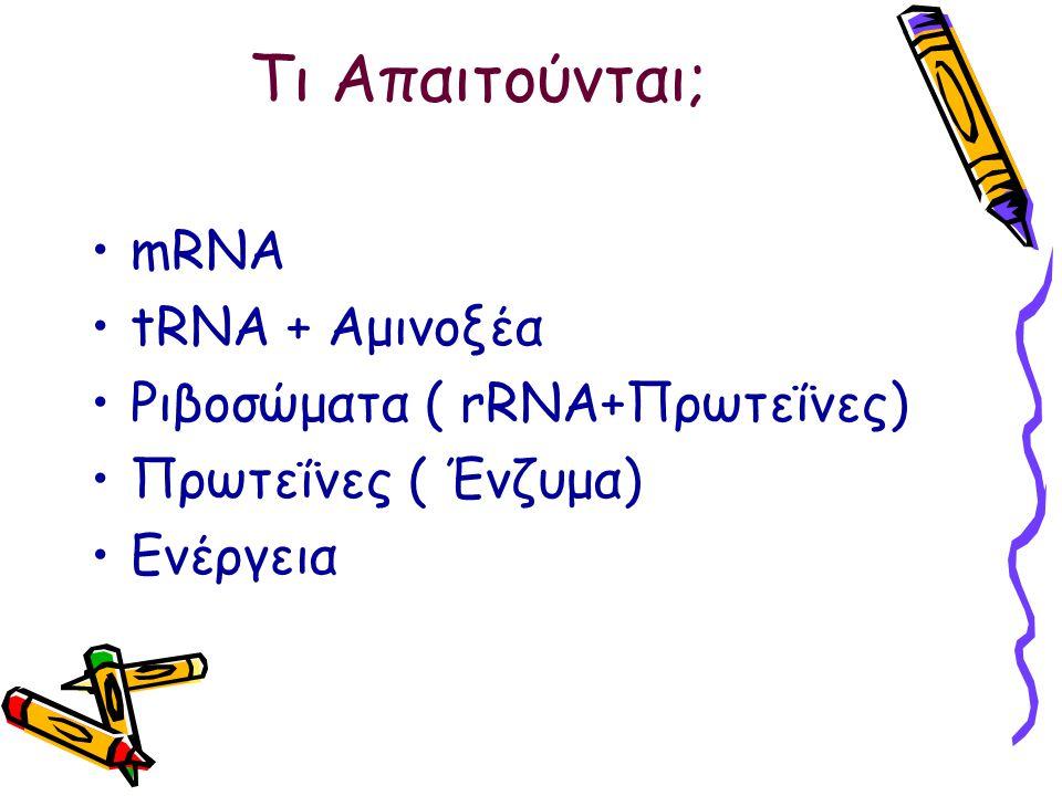 Τι Απαιτούνται; mRNA tRNA + Αμινοξέα Ριβοσώματα ( rRNA+Πρωτεΐνες)