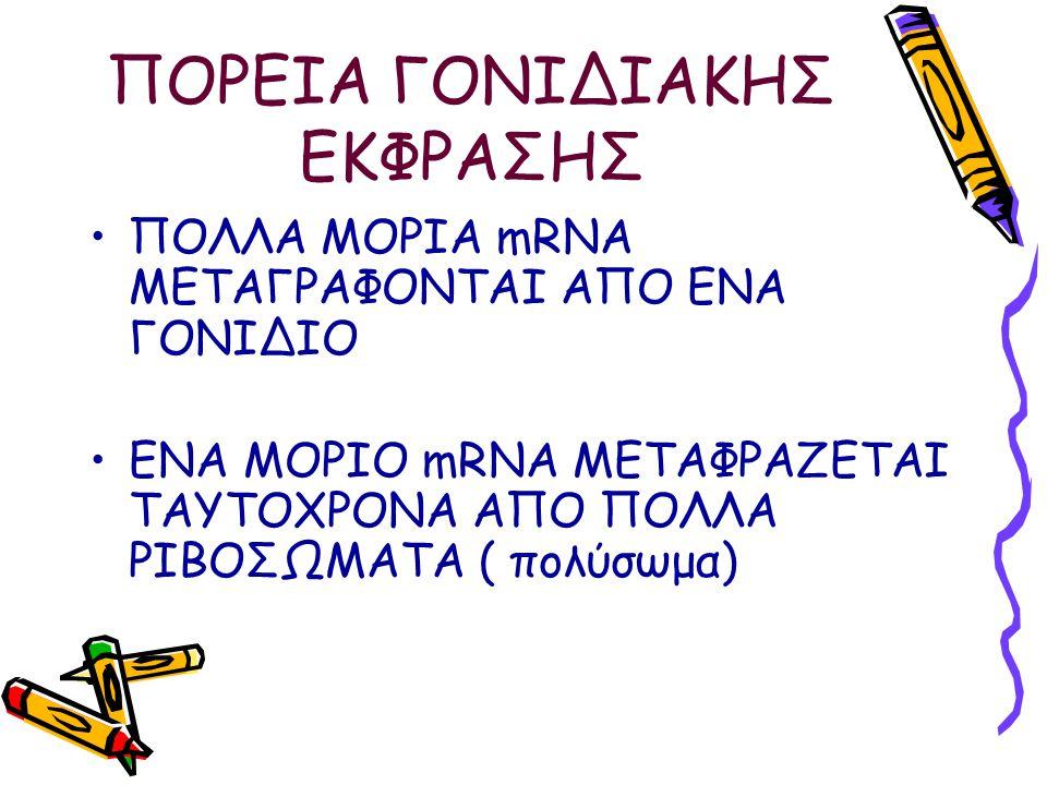 ΠΟΡΕΙΑ ΓΟΝΙΔΙΑΚΗΣ ΕΚΦΡΑΣΗΣ