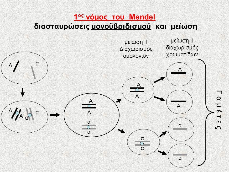 1ος νόμος του Mendel διασταυρώσεις μονοϋβριδισμού και μείωση