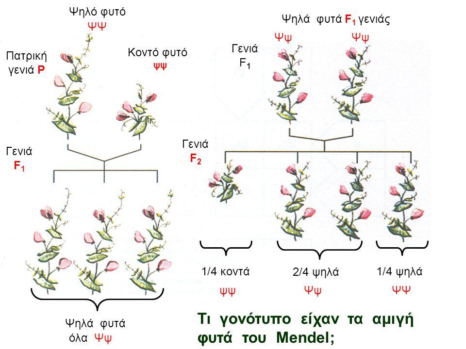 Τι γονότυπο είχαν τα αμιγή φυτά του Mendel;