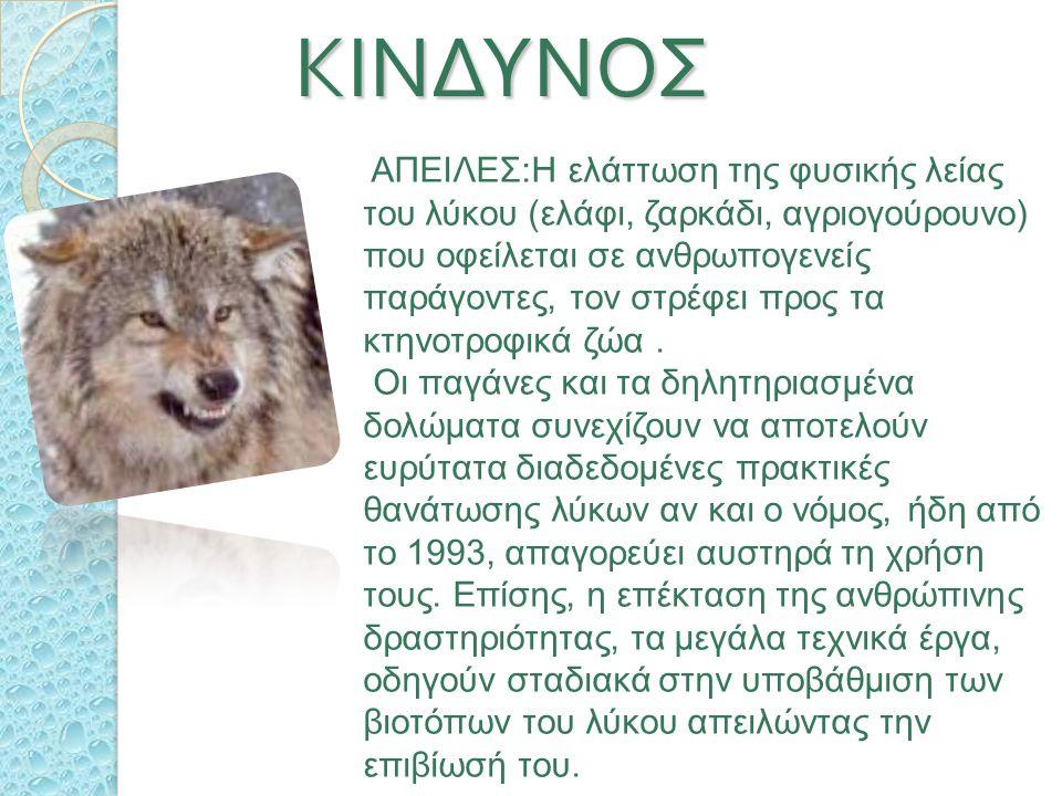 ΚΙΝΔΥΝΟΣ