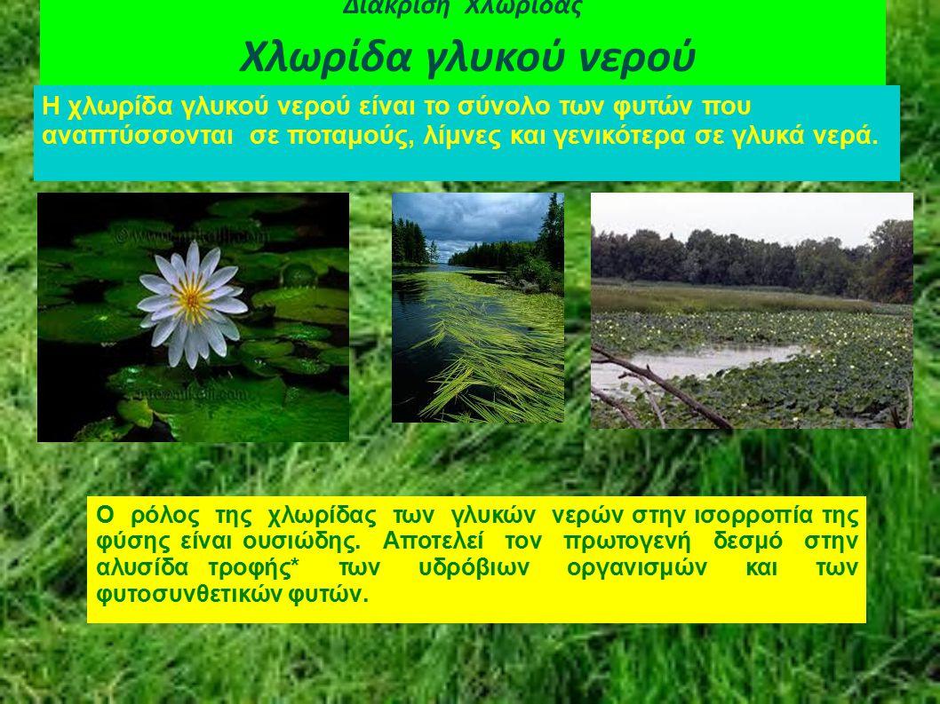 Διάκριση Χλωρίδας Χλωρίδα γλυκού νερού