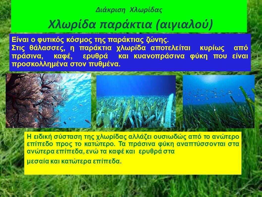 Διάκριση Χλωρίδας Χλωρίδα παράκτια (αιγιαλού)
