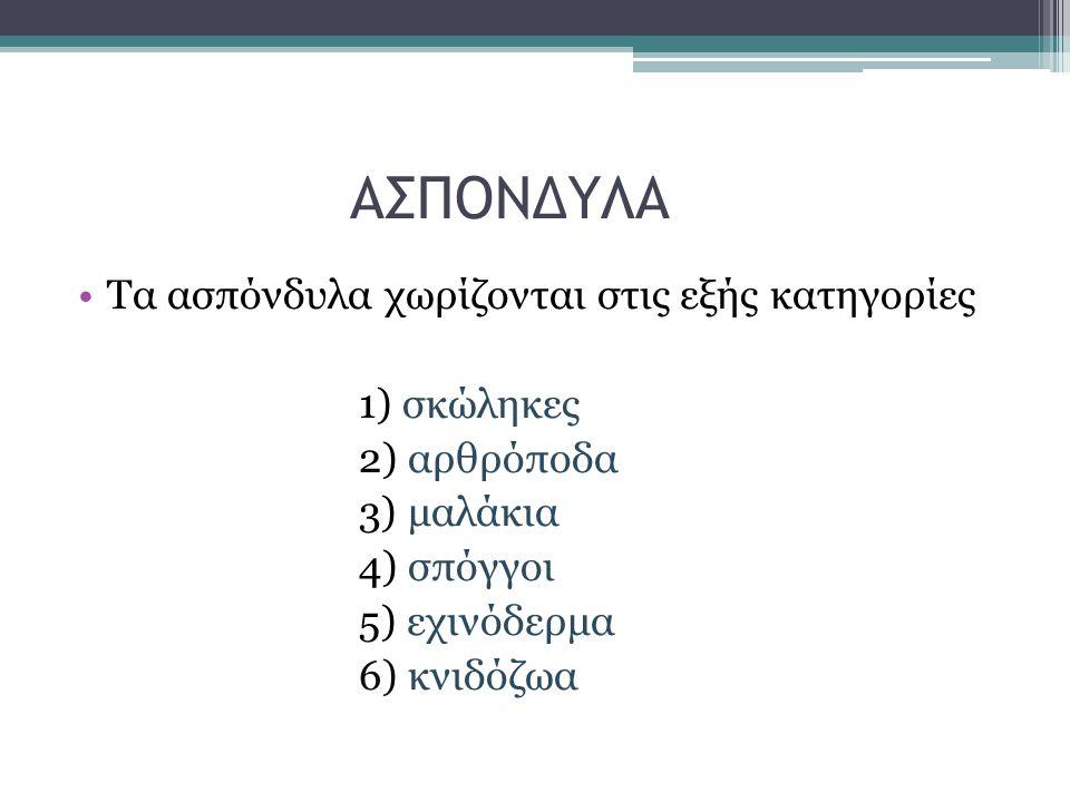 ΑΣΠΟΝΔΥΛΑ Τα ασπόνδυλα χωρίζονται στις εξής κατηγορίες 1) σκώληκες