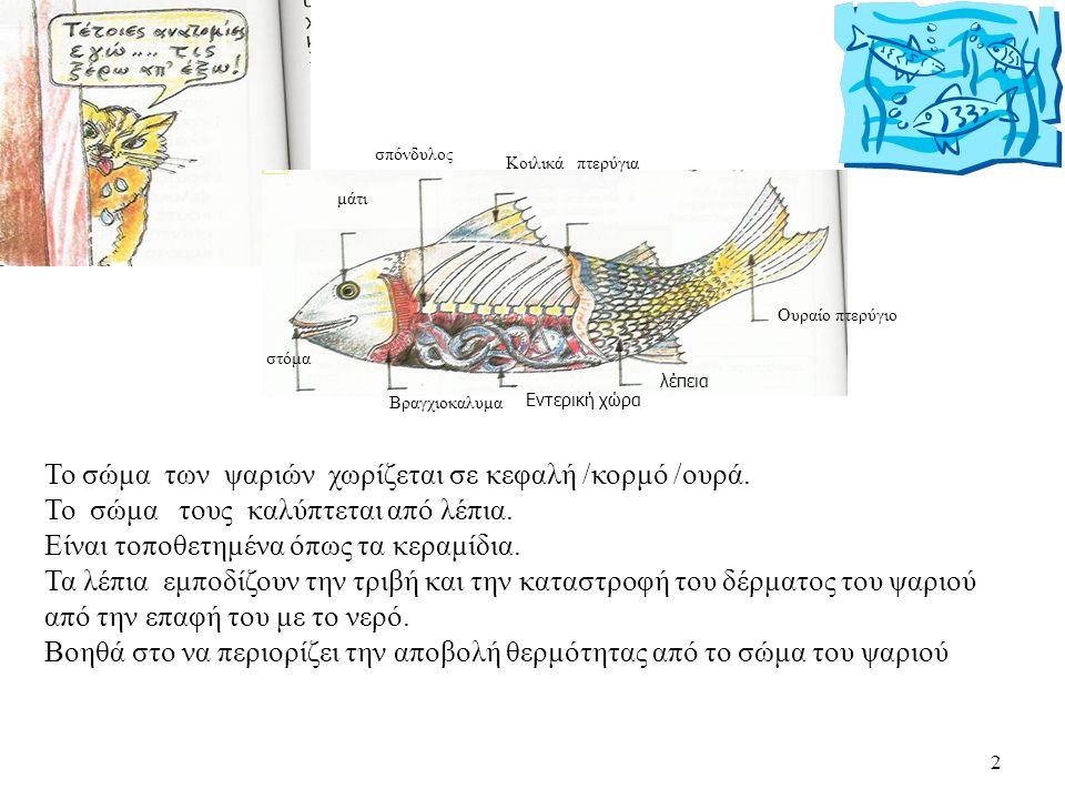 Το σώμα των ψαριών χωρίζεται σε κεφαλή /κορμό /ουρά.