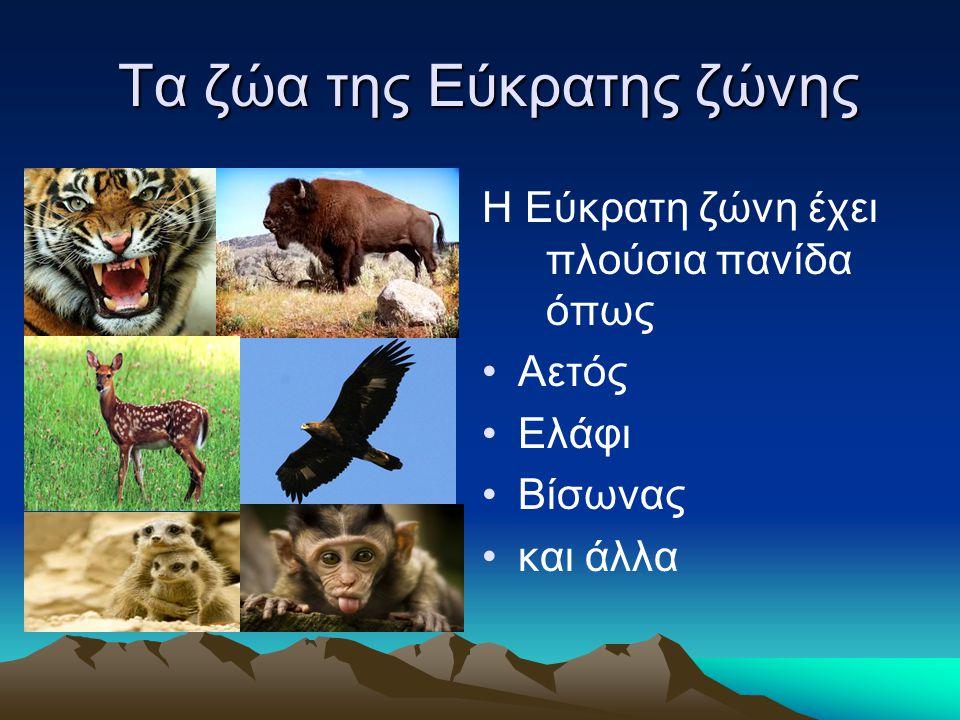Τα ζώα της Εύκρατης ζώνης