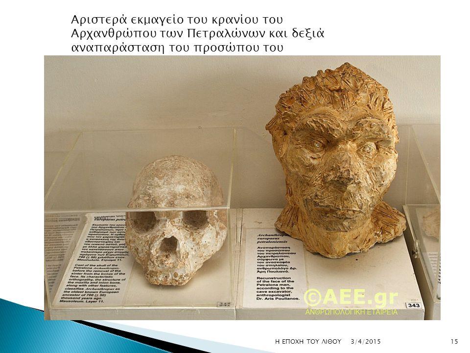 Αριστερά εκμαγείο του κρανίου του Αρχανθρώπου των Πετραλώνων και δεξιά αναπαράσταση του προσώπου του