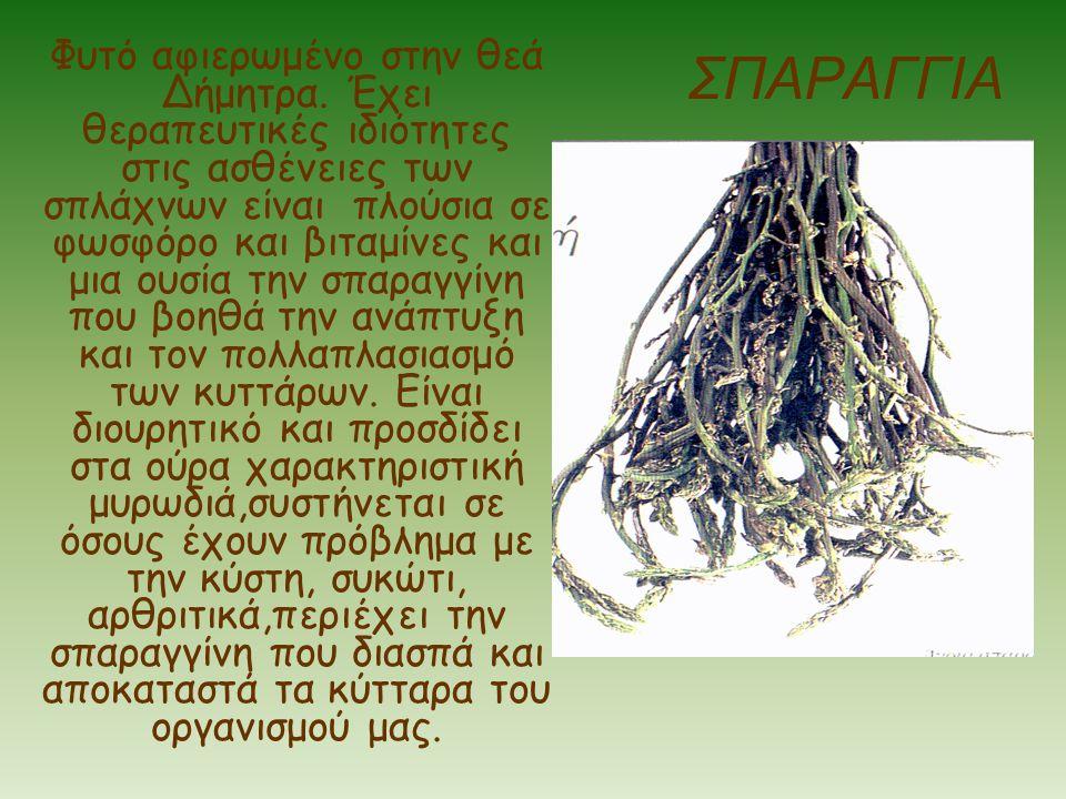Φυτό αφιερωμένο στην θεά Δήμητρα