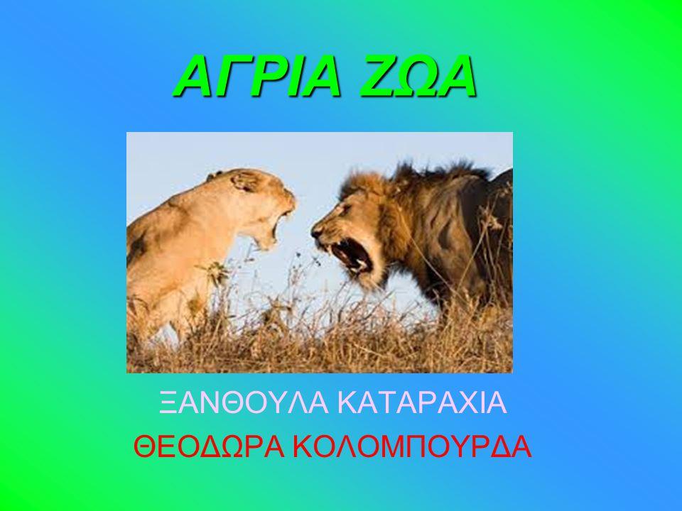 ΞΑΝΘΟΥΛΑ ΚΑΤΑΡΑΧΙΑ ΘΕΟΔΩΡΑ ΚΟΛΟΜΠΟΥΡΔΑ