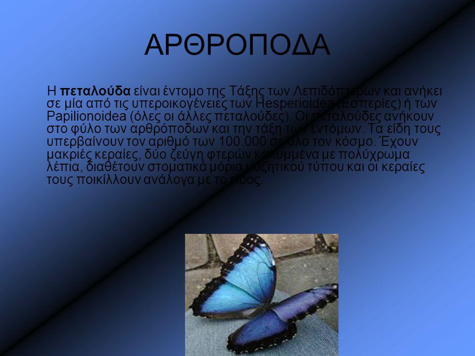 ΑΡΘΡΟΠΟΔΑ