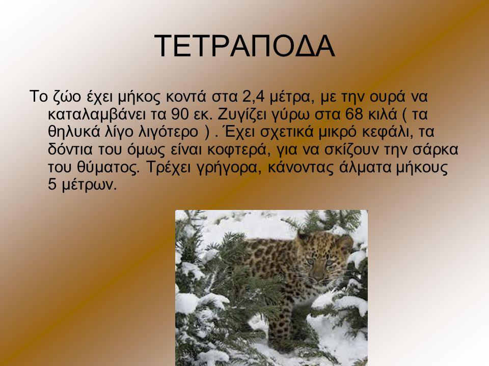 ΤΕΤΡΑΠΟΔΑ