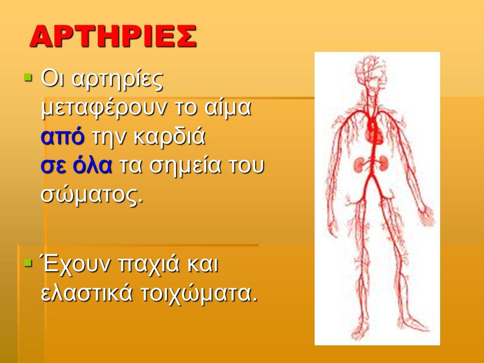 ΑΡΤΗΡΙΕΣ Οι αρτηρίες μεταφέρουν το αίμα από την καρδιά σε όλα τα σημεία του σώματος.