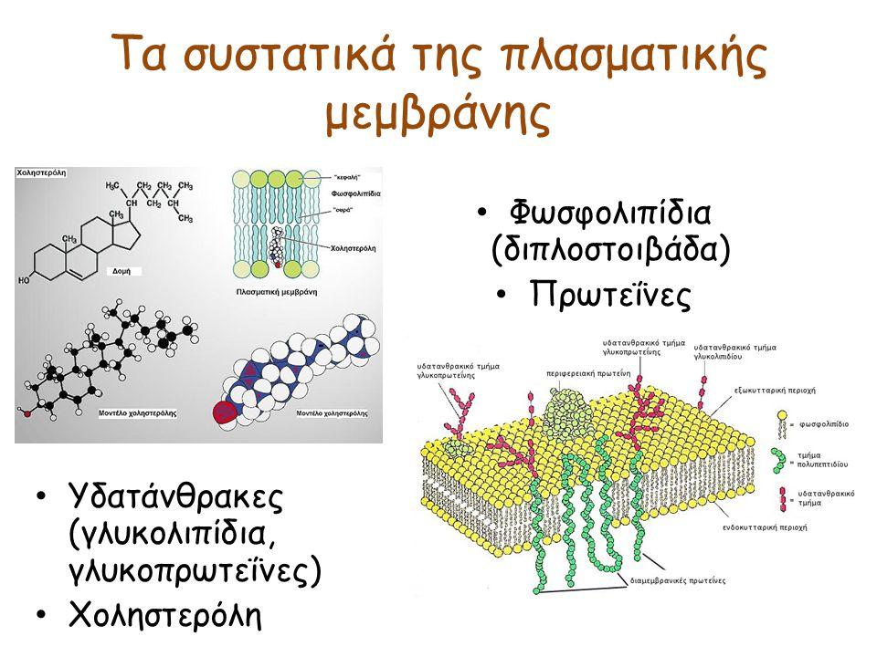 Τα συστατικά της πλασματικής μεμβράνης