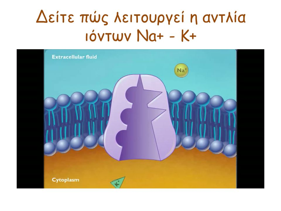 Δείτε πώς λειτουργεί η αντλία ιόντων Na+ - K+