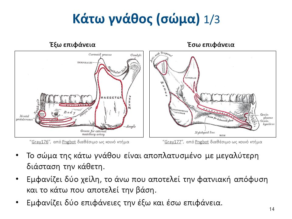 Slide2tttt , από Anatomist90 διαθέσιμο με άδεια CC BY-SA 3.0