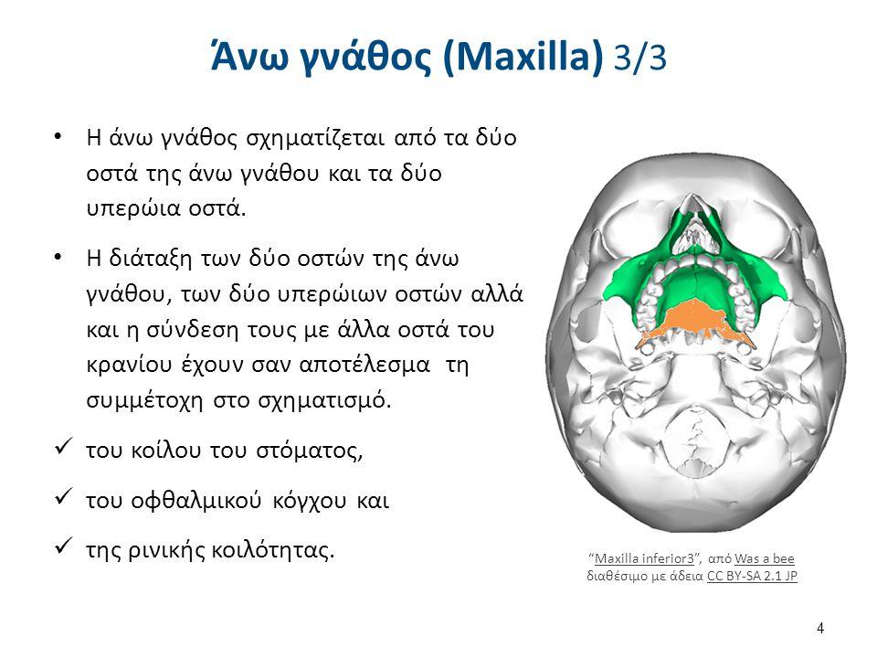 Ανατομικά στοιχεία της άνω γνάθου 1/5