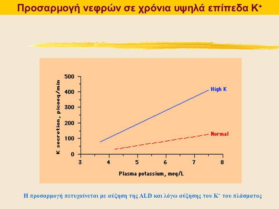 Προσαρμογή νεφρών σε χρόνια υψηλά επίπεδα Κ+