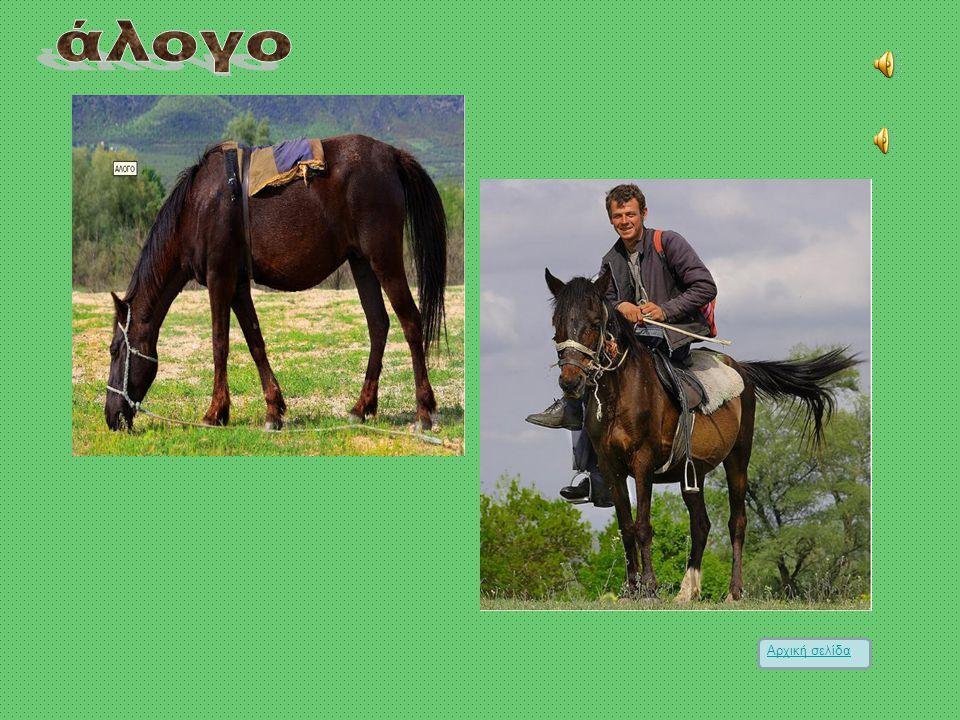 άλογο Αρχική σελίδα