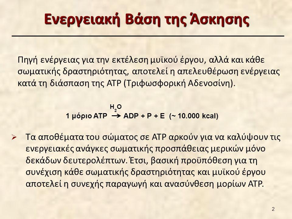 Παραγωγή - Ανασύνθεση ATP