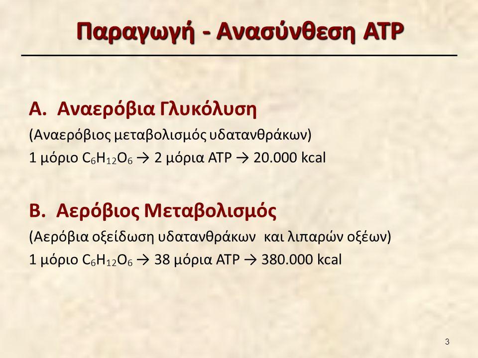 Αερόβιος μεταβολισμός