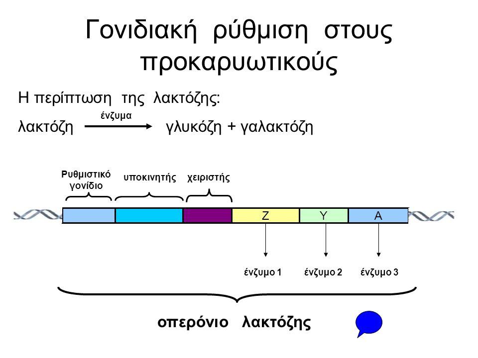 Γονιδιακή ρύθμιση στους προκαρυωτικούς