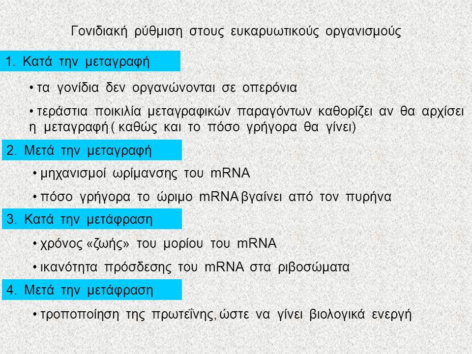 Γονιδιακή ρύθμιση στους ευκαρυωτικούς οργανισμούς