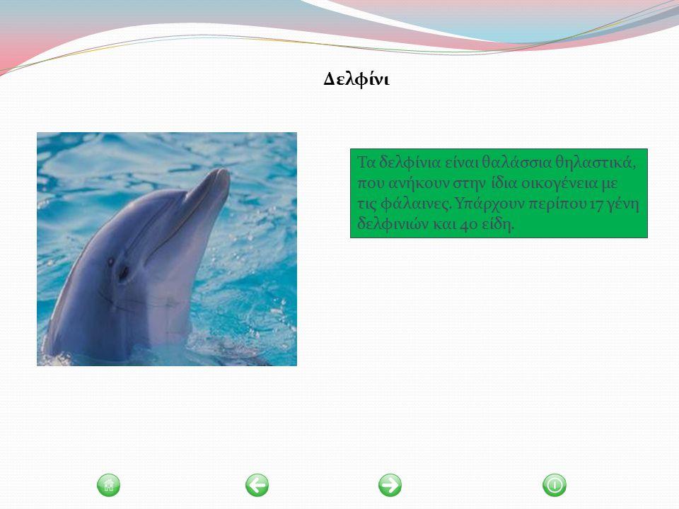 Δελφίνι Τα δελφίνια είναι θαλάσσια θηλαστικά, που ανήκουν στην ίδια οικογένεια με τις φάλαινες.