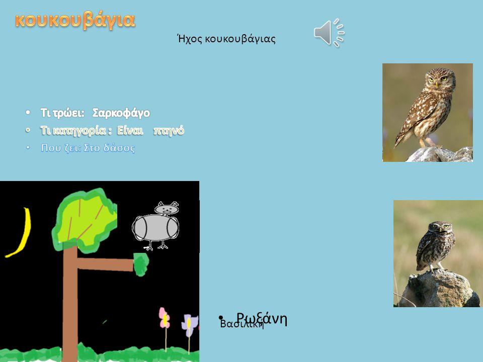 κουκουβάγια Ρωξάνη Ήχος κουκουβάγιας Τι τρώει: Σαρκοφάγο