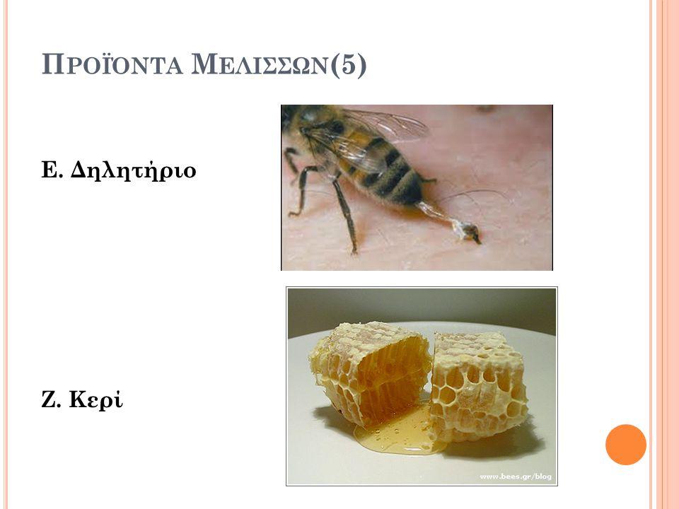 Προϊόντα Μελισσων(5) Ε. Δηλητήριο Ζ. Κερί