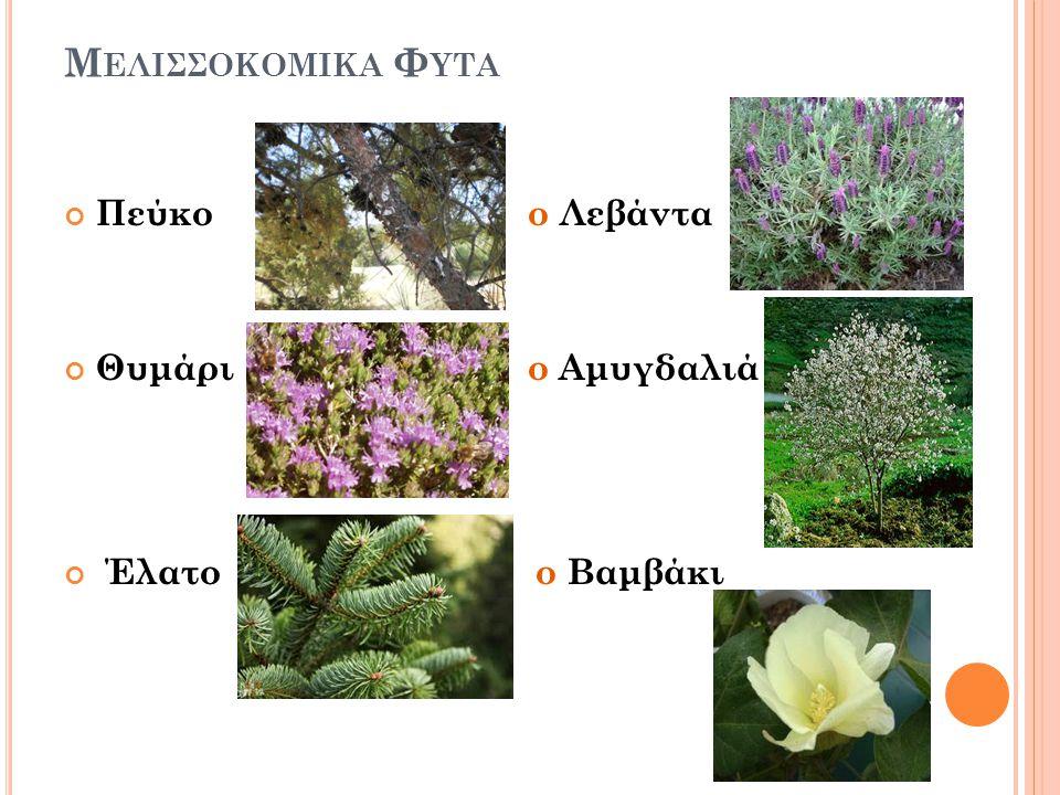Μελισσοκομικα Φυτα Πεύκο ο Λεβάντα. Θυμάρι ο Αμυγδαλιά.