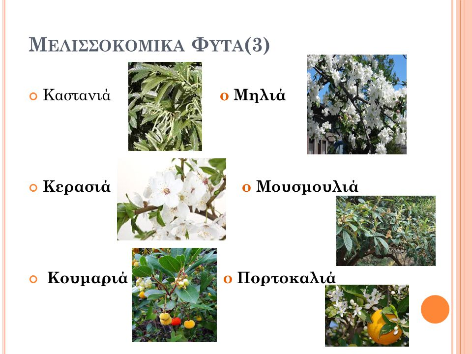 Μελισσοκομικα Φυτα(3) Καστανιά ο Μηλιά Κερασιά ο Μουσμουλιά
