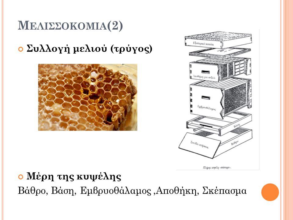 Μελισσοκομια(2) Συλλογή μελιού (τρύγος) Μέρη της κυψέλης