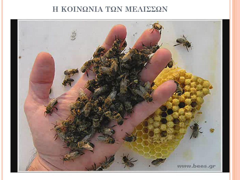 η κοινωνια των μελισσων