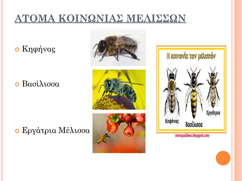 ΑΤΟΜΑ ΚΟΙΝΩΝΙΑΣ ΜΕΛΙΣΣΩΝ