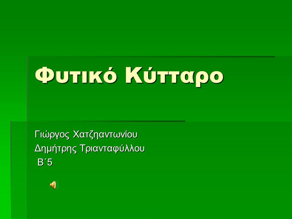 Γιώργος Χατζηαντωνίου Δημήτρης Τριανταφύλλου Β΄5