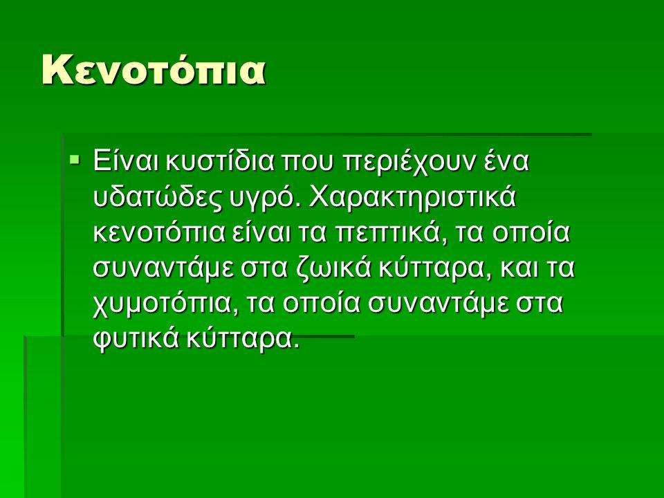 Κενοτόπια