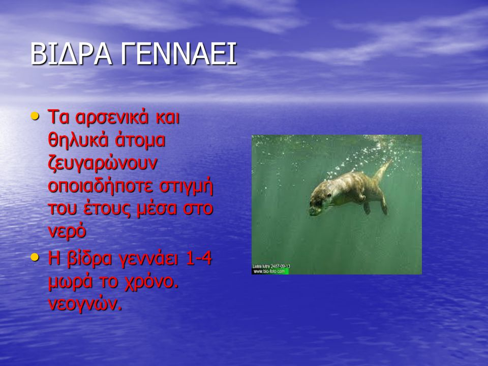 ΒΙΔΡΑ ΓΕΝΝΑΕΙ Τα αρσενικά και θηλυκά άτομα ζευγαρώνουν οποιαδήποτε στιγμή του έτους μέσα στο νερό.