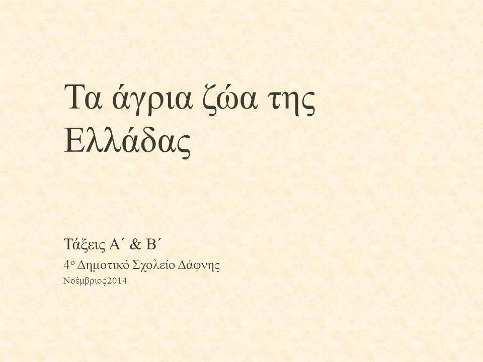 Τα άγρια ζώα της Ελλάδας