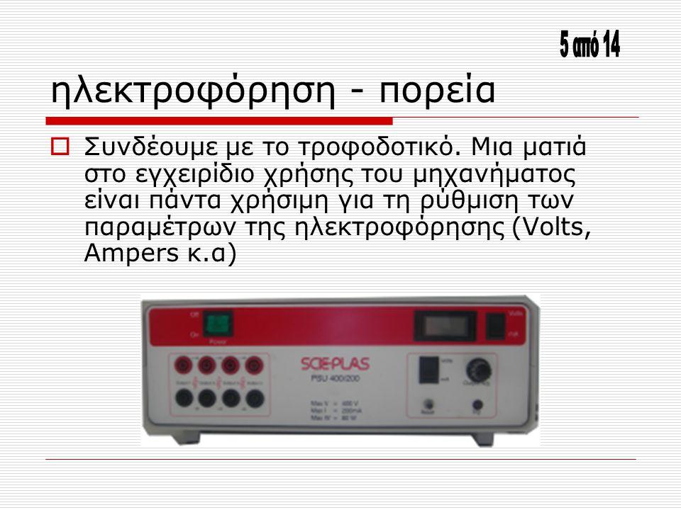 ηλεκτροφόρηση - πορεία