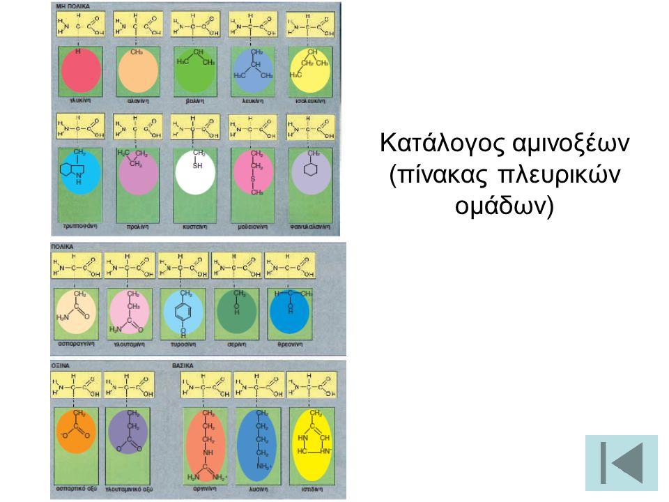 Κατάλογος αμινοξέων (πίνακας πλευρικών ομάδων)
