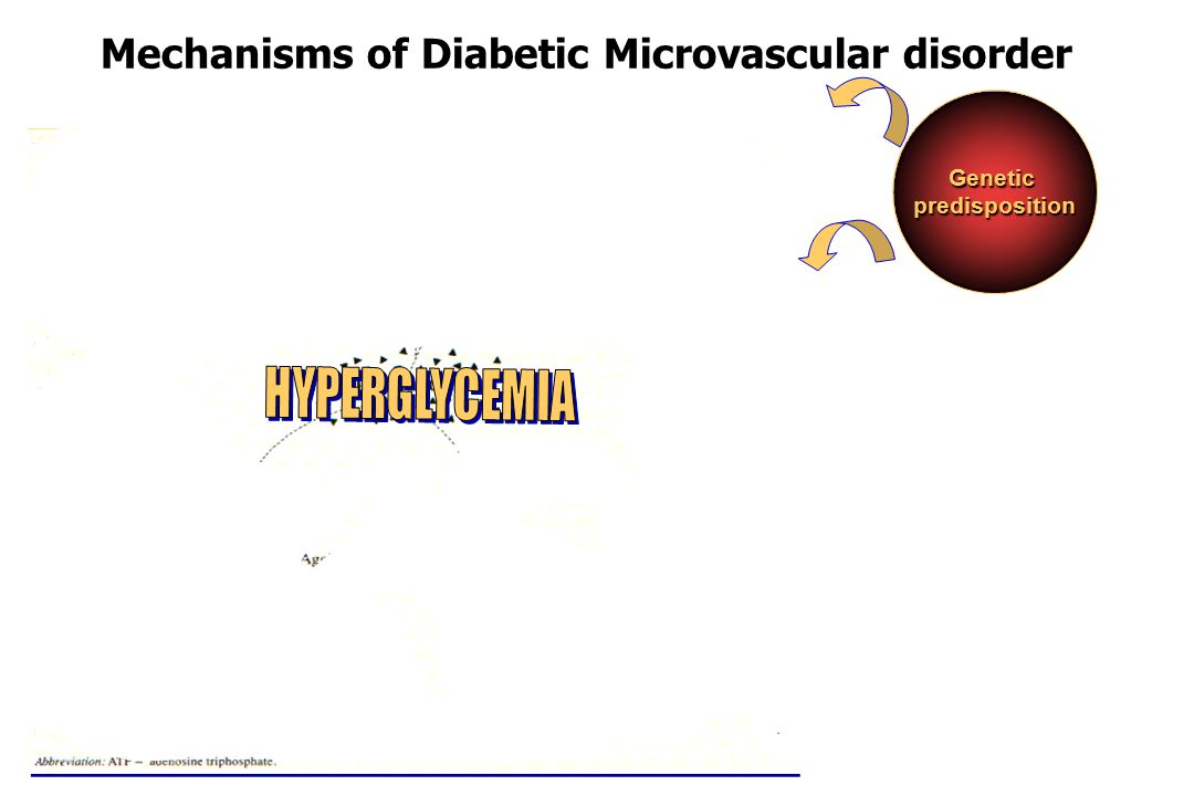Mechanisms of Diabetic Microvascular disorder