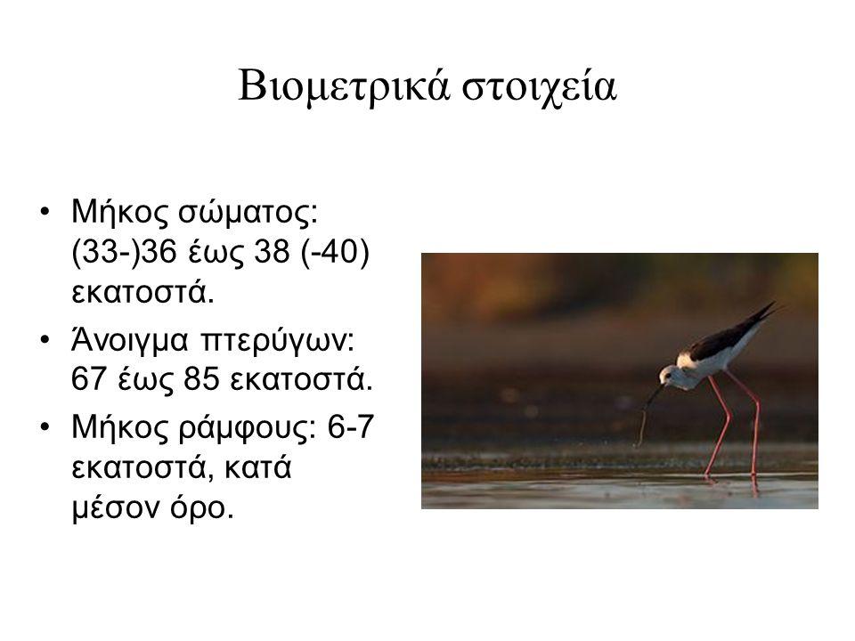 Βιομετρικά στοιχεία Μήκος σώματος: (33-)36 έως 38 (-40) εκατοστά.