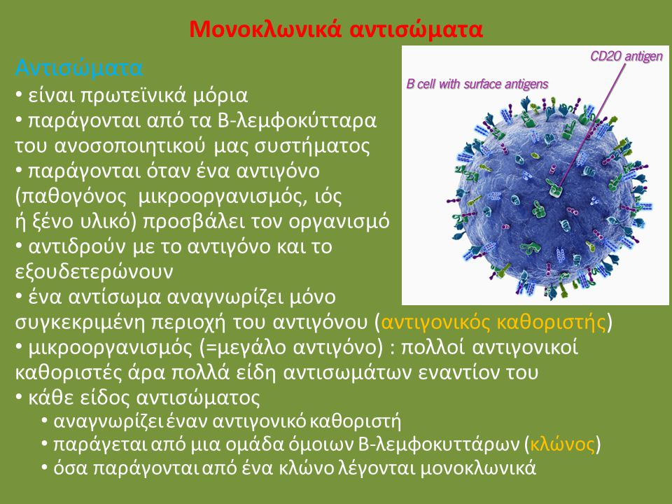 Μονοκλωνικά αντισώματα