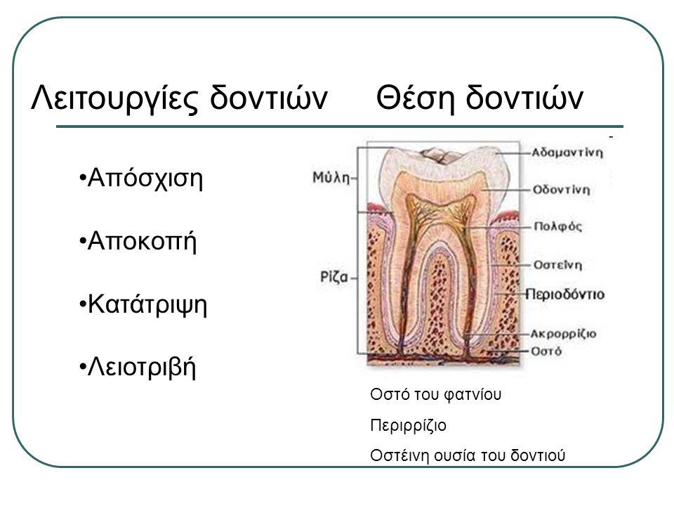 Λειτουργίες δοντιών Θέση δοντιών Απόσχιση Αποκοπή Κατάτριψη Λειοτριβή