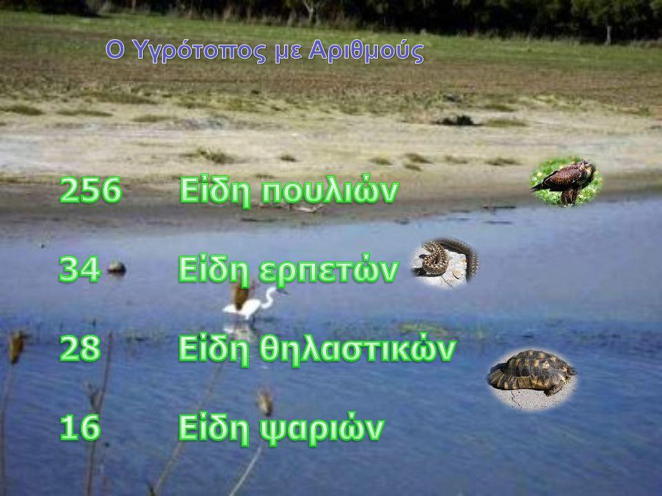 256 Είδη πουλιών 34 Είδη ερπετών 28 Είδη θηλαστικών 16 Είδη ψαριών