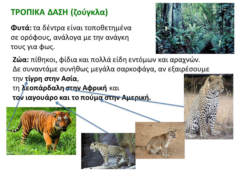 ΤΡΟΠΙΚΑ ΔΑΣΗ (ζούγκλα)