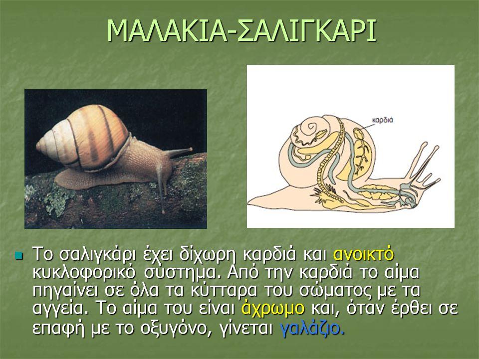 ΜΑΛΑΚΙΑ-ΣΑΛΙΓΚΑΡΙ