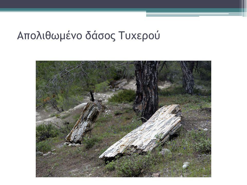 Απολιθωμένο δάσος Τυχερού