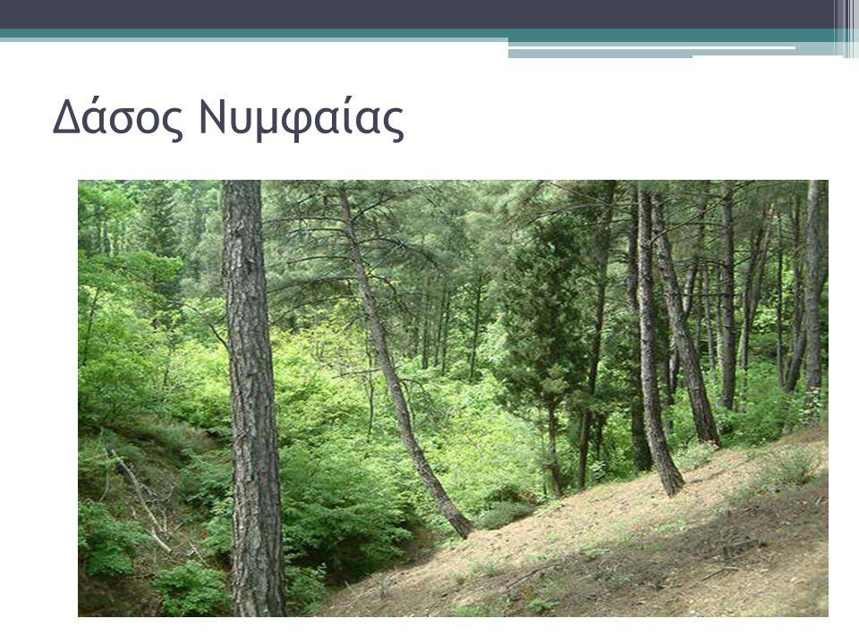 Δάσος Νυμφαίας